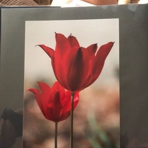 Photograph print of two tulips